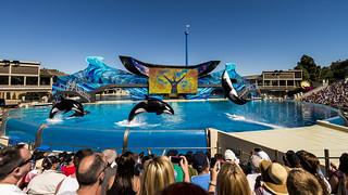 SeaWorld: One Ocean Show
