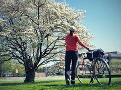 Day 24: Checking on the dogwood on my way home. I think it knows a lot of stories. #bikeDC #30daysofbiking