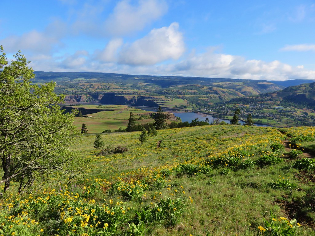 Rowena Crest from the Tom McCall Point trail.