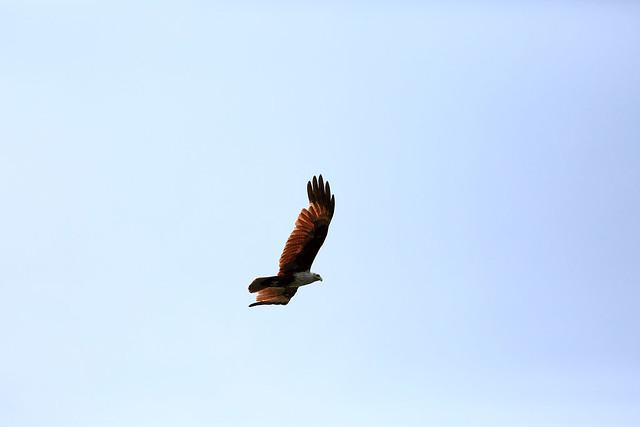 1604India-Birds2