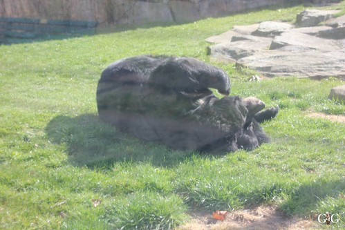 Oster-Montag im Zoo Berlin 06.04.201517