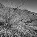 Red Rock Bush Lines by LauriNovakPhotography