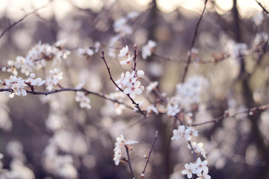 blossompetals