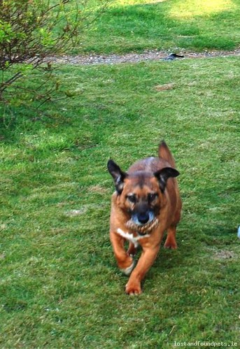 [Reunited] Mon, Mar 23rd, 2015 Lost Male Dog - Old Gorey To Arklow Road, Aske, Gorey, Wexford