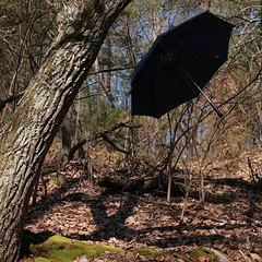 89/365  Hmm...  #chasinglight #keepexploring #umbrella