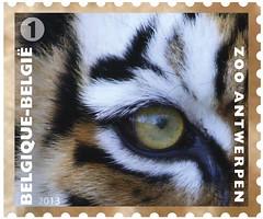 11 Zoo Timbre 7 Tigre