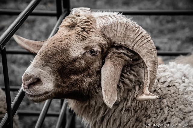 Selfie utópico y tilín ovejuno