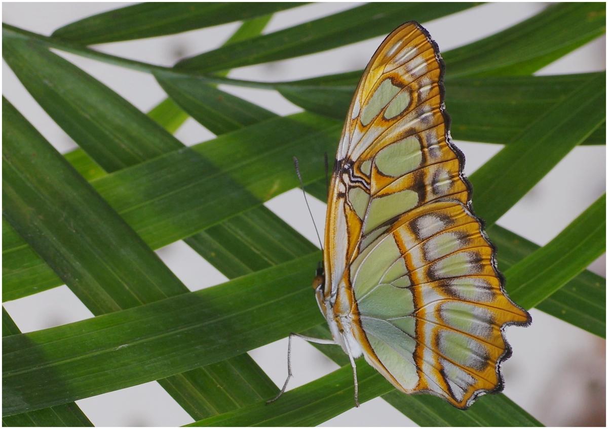 Papillons en Fêtes 2015 16804029117_ed625ed25d_o