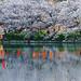 Shinobazu Pond by guen-k