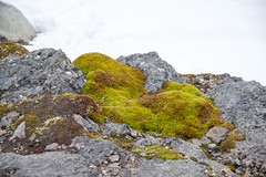 There is some vegetation in Antarctica IMG_1853