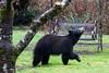 Spring Bear 1