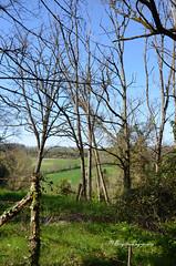 A l'orée d'un bois, vers les collines