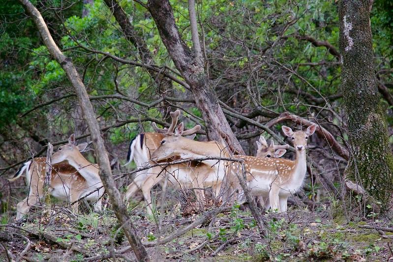 provence rochegude caslte park deers