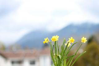 West Coast flower-scape