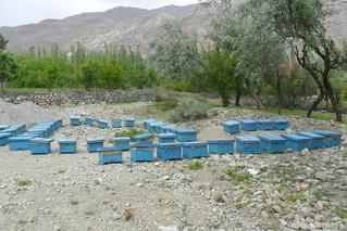 Owl MF beehives