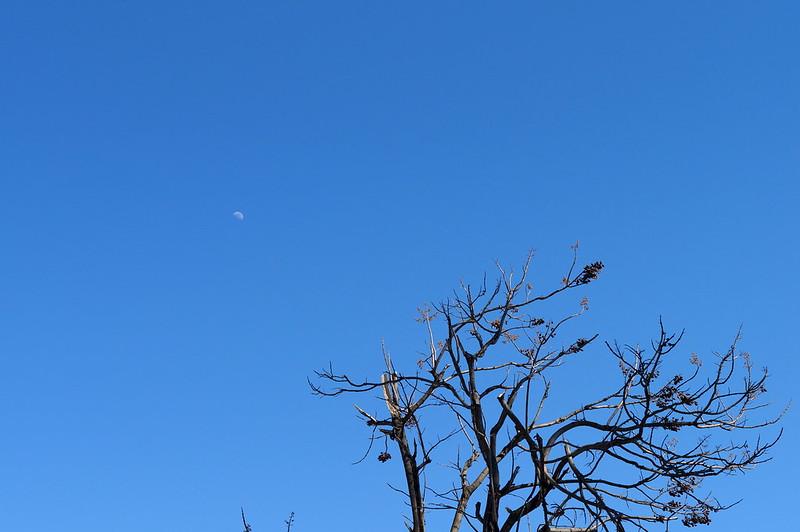 青空に浮かぶ月_201503