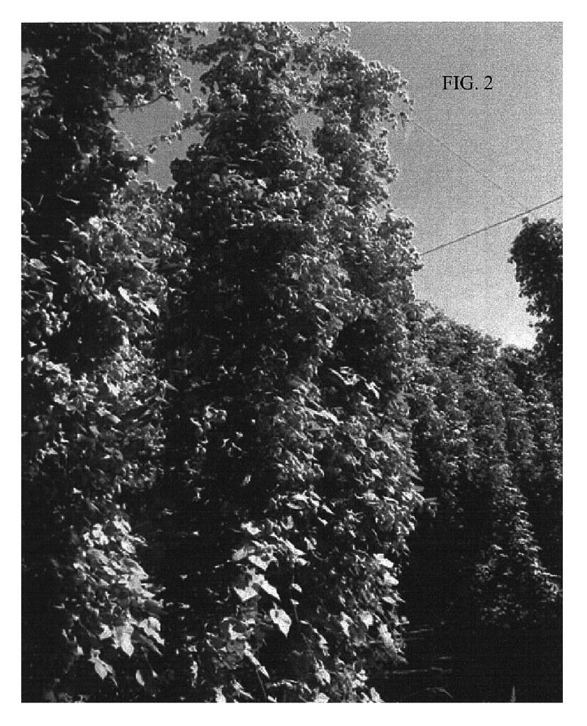 USPP018602-20080318-D00002