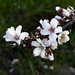 Primavera blanca by L Poems