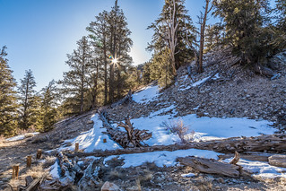 Morning in the Bristlecone Pines
