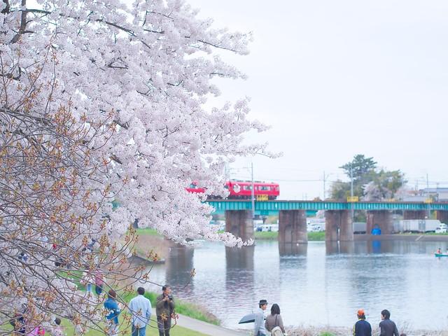 150404_Sakura_and_ 8