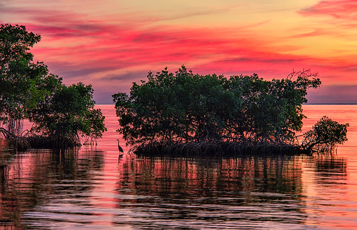 puntagorda puntagordaisles pgi florida fl charlotteharbor harbor water reflections sunset beautiful waves calm surface poncedeleon historicalpark canoneos60d canon 60d heron pink clouds horizon charlotte charlottecounty ripples stevefrazierphotography evening sundown fierysky awesome artistic vines highquality image photo picture photograph photography southernflorida print nature