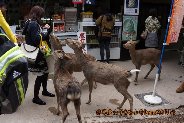 日本奈良公園東大寺15