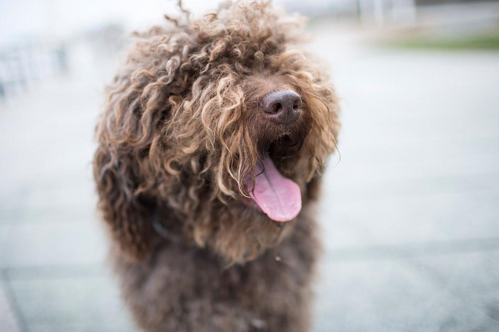 Pop Pups: Obélix