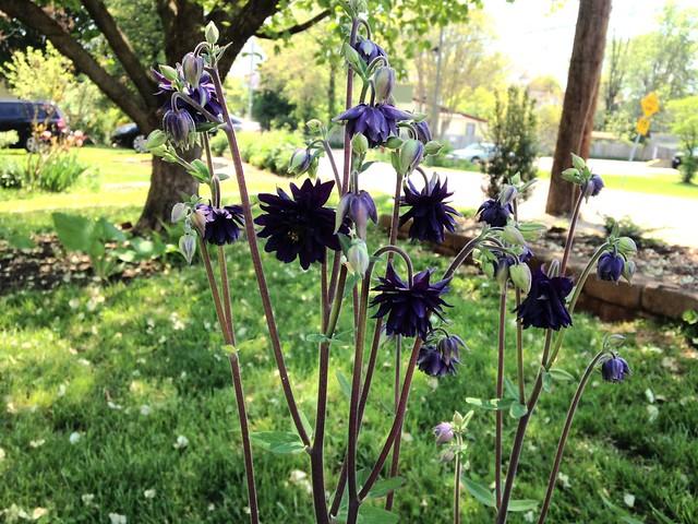 Garden updates, 4 May 2015