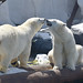 Polar Bear Kiss ? Seaworld in San Diego