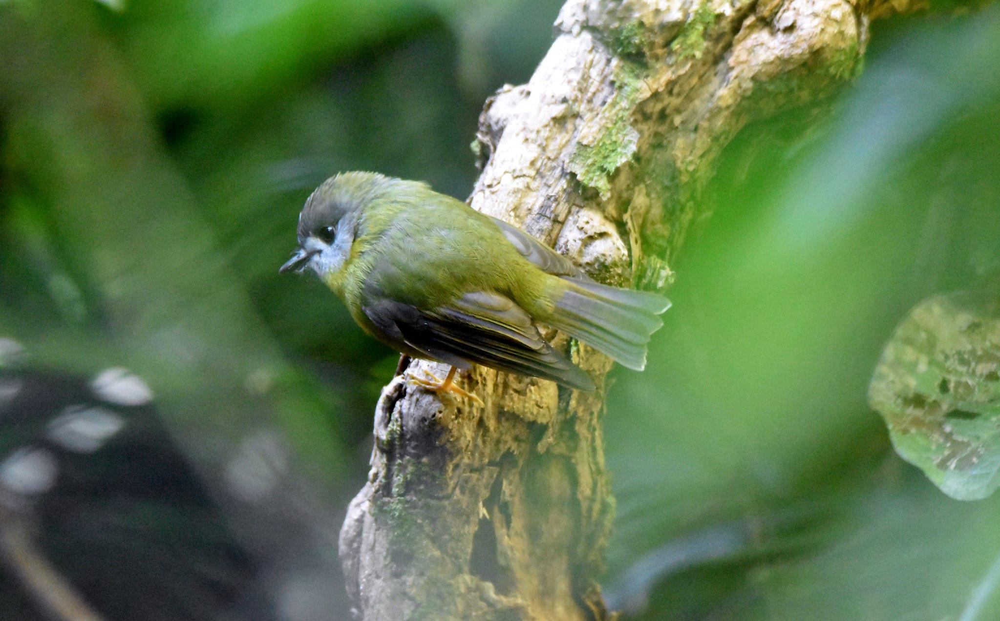 rainforest birds birds in backyards