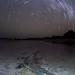 Crocodile at Night by Will Burrard-Lucas | Wildlife