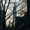 Empire Branches #VSCOcam #morningcommute #empirestate #nyc #nyccommute
