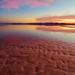 "salty  shoreline ripples by Scott Stringham ""Rustling Leaf Design"""