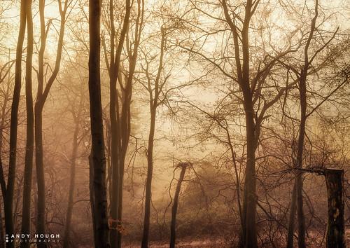 wood trees england mist misty sunrise woodland golden soft mood unitedkingdom sony moods beech goldenhour a77 littlewittenham sonyalpha andyhough slta77 littlewittenhamwood andyhoughphotography