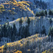 Fall in the Rockies by foto guy Terry