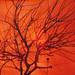 tree silhoutte 2 3-2015