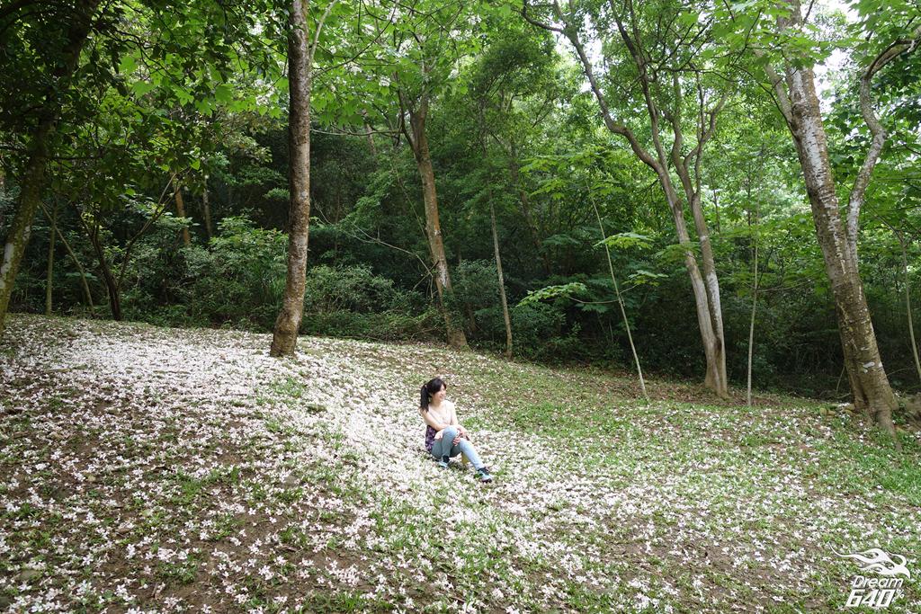 苗栗賞油桐-客家大院九華山天空步道17