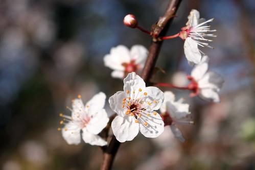 Flowering tree III
