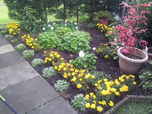 Flower plot taken September 30th 2014