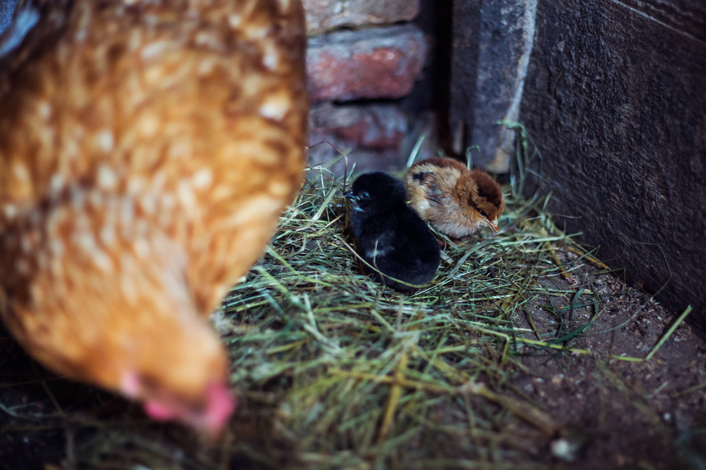 285/365 - black chicklet
