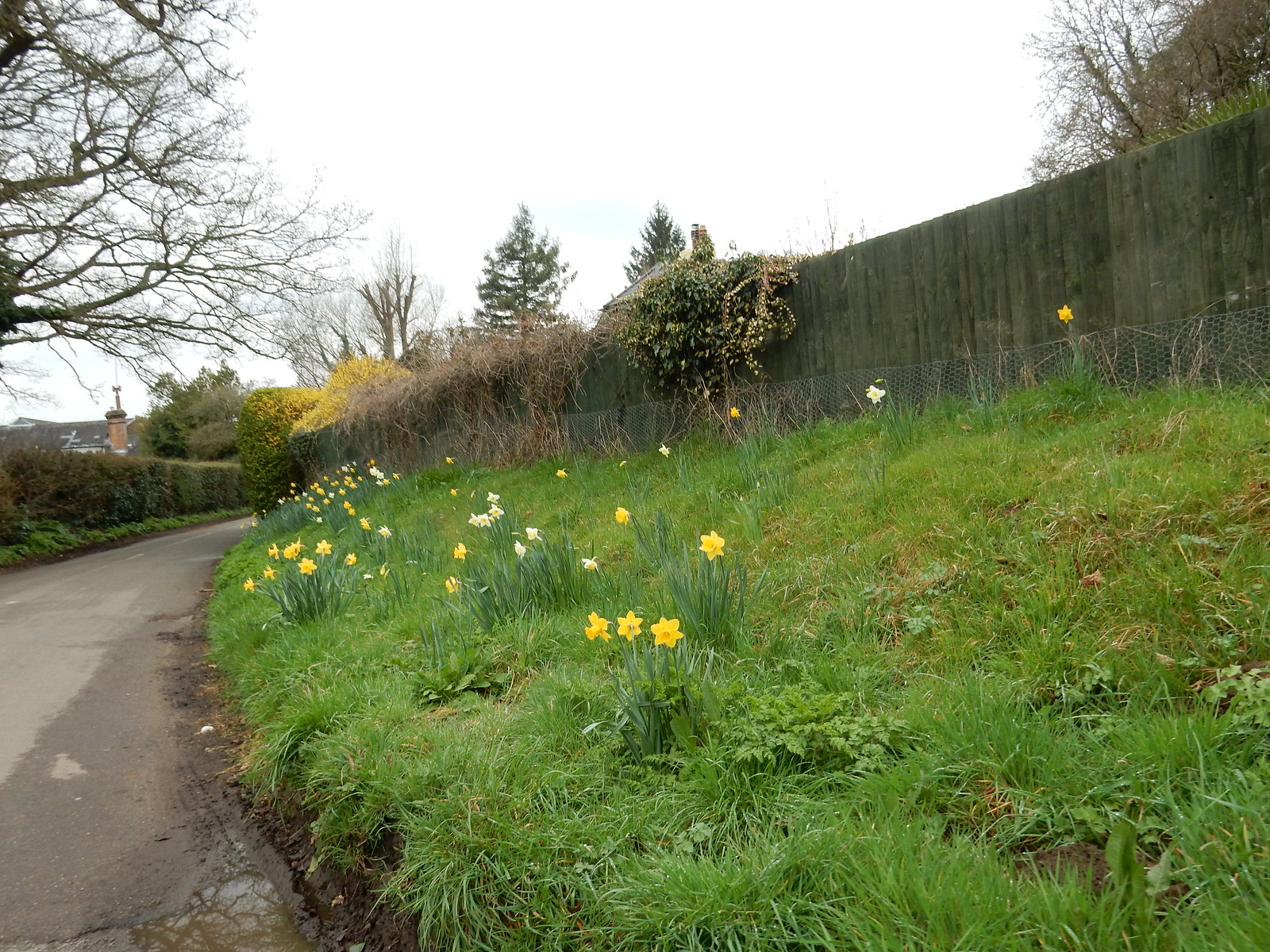Daffs Gomshall to Guildford