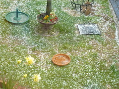 Hailstones this afternoon