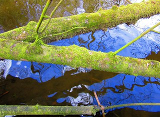 Like A Tree Over Ripple Water