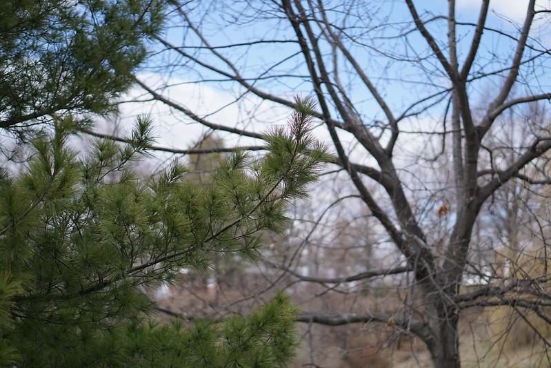 Nature in Beacon NY