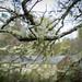 Small photo of Usnea and Foliose Lichen