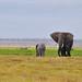 Elephanting Around! by Ashwati Vipin - On Short Hiatus