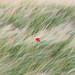 Solitude by Louis Murphy