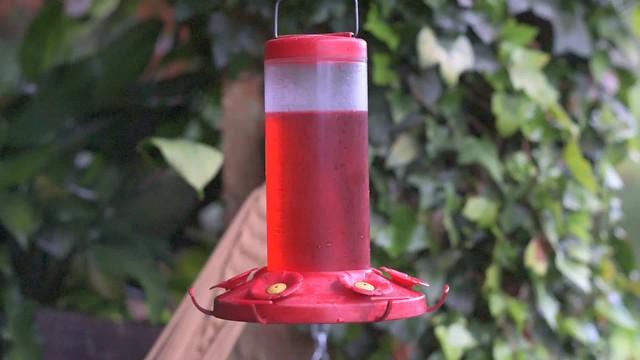 Costa Rica Hummingbirds (video) - Nikon D750 - Nikkor 85mm f/2 AI-S