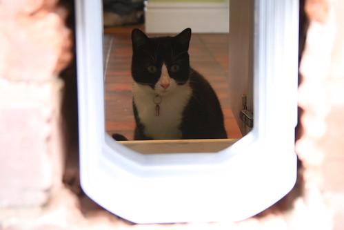 Cat flap DIY