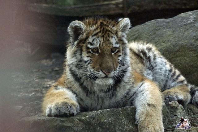 Zoo Eberswalde 22.03.2015   242